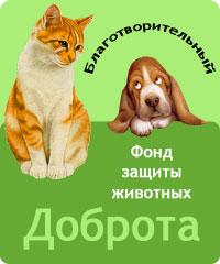 Фонд защиты животных в Уфе